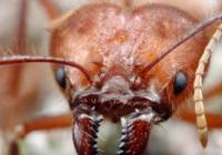 Mravenčí den - Zoo Hluboká nad Vltavou