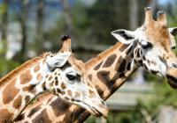 Prvňáčci zdarma do Zoo Zlín