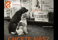 Umísťovací výstava psů - Lužánecký park Brno
