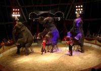 Cirkus Humberto - Praha Krč