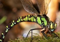 Fascinující svět brouků