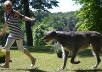 Klubové výstavy psů v parku Zámek Náměšť nad Oslavou