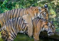 Oslava mezinárodního dne zvířat v Zoo Praha