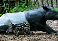 Den zvířat v Zoo Zlín