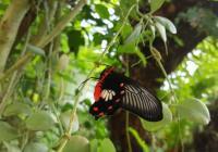 Motýli a rostliny