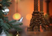 Vánoční koncert - Zámek Sychrov