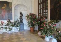 Výstava kamélií na zámku Rájec nad Svitavou