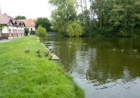 Čepelský rybník, Doksy