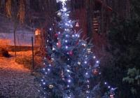 Rozsvícení vánočního stromu v Zoo Ústí nad Labem