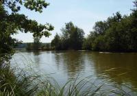 Výlov rybníka Branišovský Velký - České Budějovice