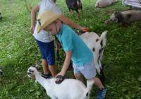 Létohrátky se zvířátky 2020 - Šiklův mlýn Zvole nad Pernštejnem