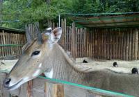 Zoopark Berousek - Current programme