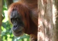 Sedm dní pro pralesy - Zoo Hodonín