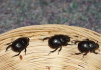 Den hmyzu v Zoo Ústí nad Labem