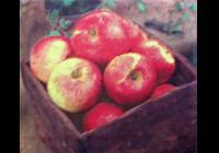 Jablkobraní v Náměšti nad Oslavou