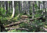 Boubín – za výhledy, pralesem i naučnou stezkou