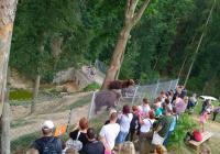 Mezinárodní den rodiny v Zoo Tábor