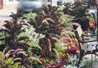 Předáška | Strakonice, nová Mekka zahradníků