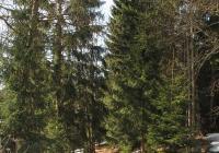 Přírodní památka Tichá říčka, Janov nad Nisou
