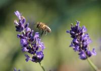 Den pro včely a medobraní