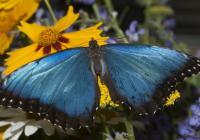 Kouzlo živých motýlů