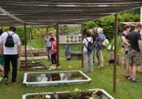 Botanická zahrada, Třeboň