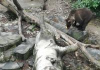 Zámecké medvědárium, Český Krumlov