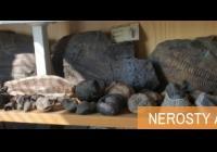 Nerosty a zkameněliny