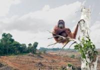 Víkend proti palmovému oleji v Zoo Děčín
