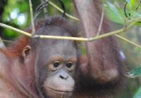 Den bez palmového oleje v Zoo Ostrava