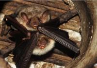 Noc netopýrů - Zámek Libochovice