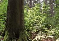 Nový prales