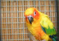 Výstava exotického ptactva zámek Libochovice