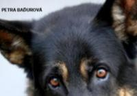 Vydání knihy Egon: Děsná psina