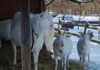 Vánoční setkání se zvířaty