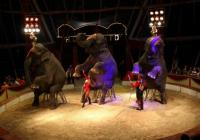 Cirkus Humberto v Brně