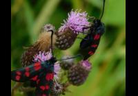 Litomyšlská entomologie