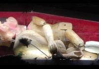 Buchty a loutky - Vítězné svině
