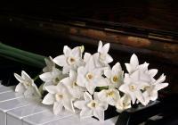 Květiny pro zámeckou paní - Zámek Náměšť na Hané