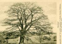 Tajemný život stromu