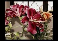 Rajhradské lilie