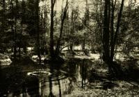 Antonín Dvořák / Inspirace přírodou