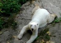 Zoo Brno, Brno