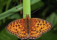 Křehká krása motýlů