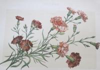 Kvetoucí ornamenty