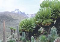 Cestopisná přednáška J. Kráčalíka - Mont Keňa