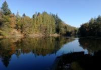 Zámecký rybník Červená Lhota, Pluhův Ždár