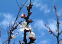 Vítání jara na zámku Plumlov