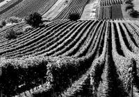 Po kobylských uličkách za vínem - Kobylí