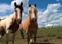 Velký den koní - Šiklův mlýn Zvole
